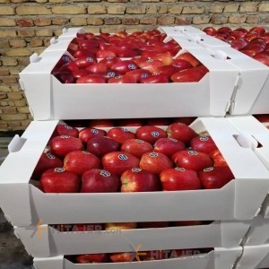 Qazvin red apple