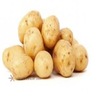 Hamedan spirit seed potato