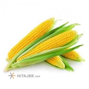 Dezful Corn Samira Seed