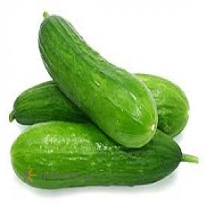 Rudan Cucumber