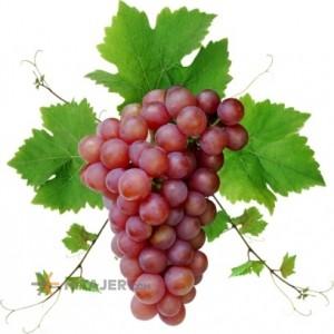 Orumiyeh Seedless Red Grapes