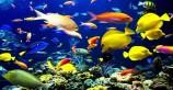 جهش تولید با صادرات ۳۰ گونه ماهی زینتی در آذربایجانشرقی