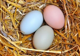 صادرات تخممرغ آغاز شد