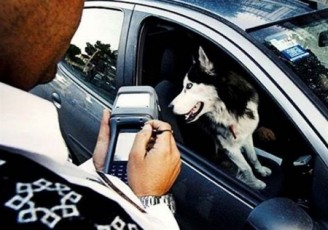 توصیه مهم پلیس درباره سگگردانی و موتورسواری زنان