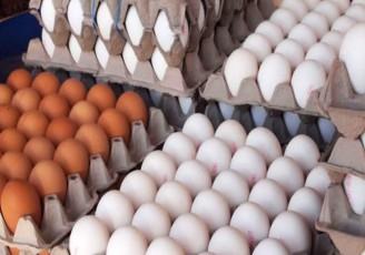 راهکار دولت برای کنترل بازار تخم مرغ