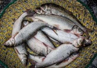 ماهی قزل آلا به ۱۲۵هزارتومان رسید
