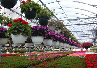 ۴۲۸ هزار گلدان گل از نوشهر به خارج از کشور صادر شد