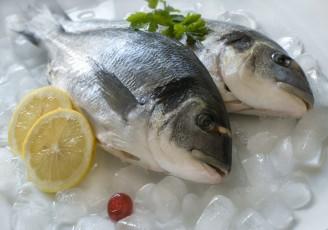 برداشت ۴۵۰ تُن ماهی صادراتی در قشم