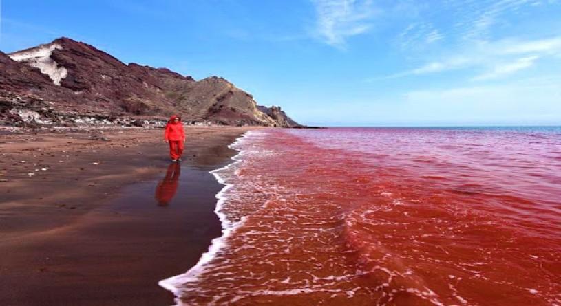 دریای سرخ، یکی از زیباترین عجایب زیر آب دنیا